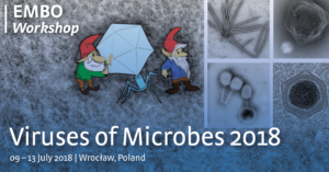 Viruses of Microbes